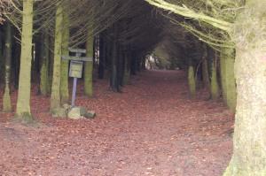 inn i skogen