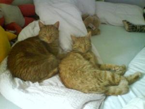 GingerPus og Bagheera