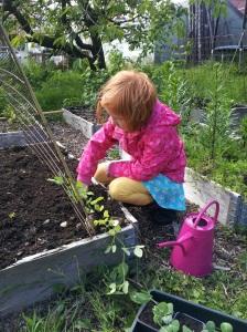 Pixie planter sukkererter