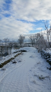 snødekt
